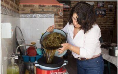 El teñido orgánico de ponchos en San Antonio de Areco